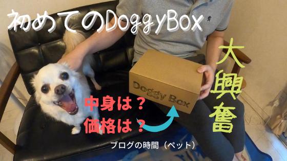 毎月おもちゃとおやつ!DoggyBox(ドギーボックス)《購入方法や中身は?》